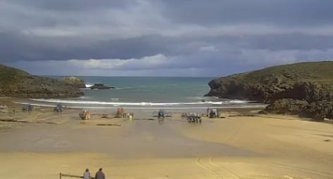 Llegan la algas (caloca, ocle) a la Playa de Barro