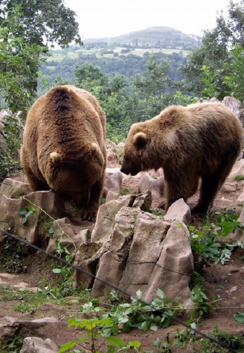 Colaborador de esta red, el Zoo La Grandera de Cangas de Onís solicita vuestra ayuda